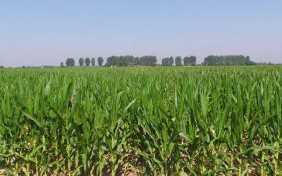Agri Informa –  Risultati economici Kverneland  Academy con il Prof. Frascarelli