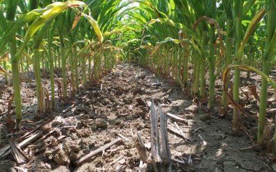 AGRI INFORMA – KVERNELAND ACADEMY: FOCUS SUI RISULTATI