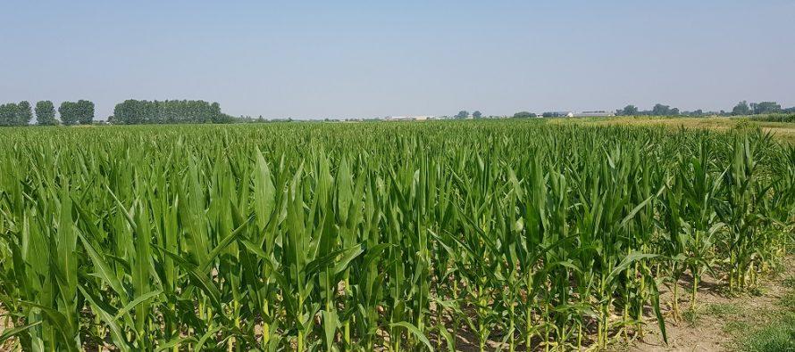 AGRICOLTURA: SE SI PASSA DALL'ARATURA ALLA MINIMA, NON E' VERO CHE SI PRODUCE DI MENO